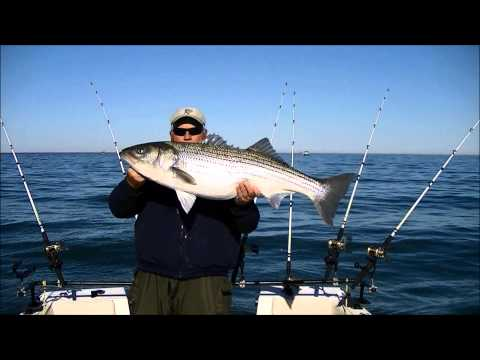 Full download team teacher striper fishing on the for Striper fishing chesapeake bay