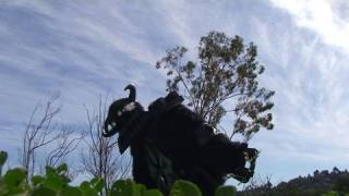 Mega64: Shadow of the Colossus (HD)