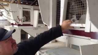 Разведение кроликов в домашних условиях(Разведение кроликов в домашних условиях по силам каждому, если разведение кроликов организовано с умом., 2014-05-13T18:20:34.000Z)