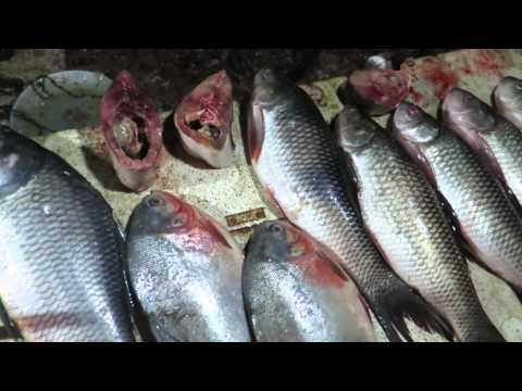 Fish Market In Dispur, Assam