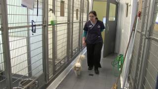 Sydney Animal Hospitals - Dog Boarding Facilities