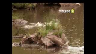 Viasat Nature Eastern Europe - Wild Serbia - promo