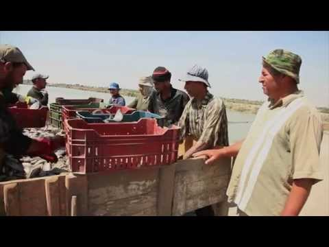 Egyptian fish farmers learn best aquaculture practices