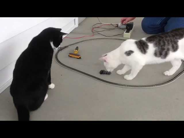 Cats Vs. N Scale Trains