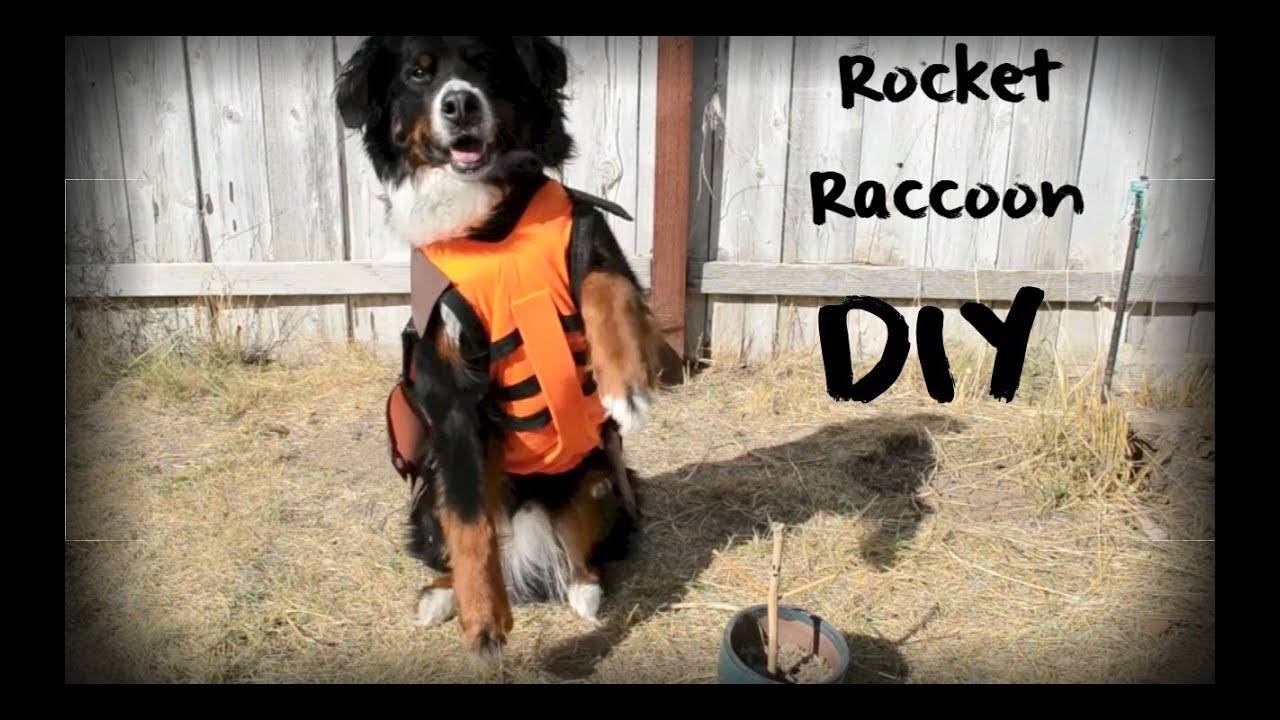 Diy rocket raccoon costume for dogs youtube diy rocket raccoon costume for dogs solutioingenieria Gallery
