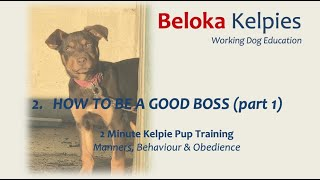 How to be a good boss (part 1) - 2 MIN Kelpie Pup Training