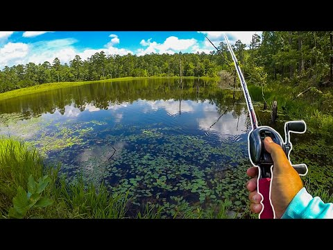 Fishing A Hidden Pond Deep In The Forest