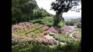 JR東海さわやかウォーキング2015/06/13 三河塩津駅から蒲郡駅までの街歩き、新緑の形原温泉あじさいの里を訪ねて