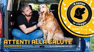 Trasportare animali in auto, i consigli di tolettatrice e veterinaria