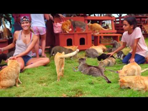 Santuario de gatos Lanai Hawaii