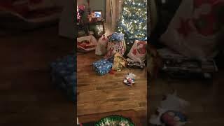 Dog opening Christmas  presents