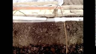 Посадка перца видео(Посадка перца рассадой в грунт под акриловую пленку. http://samidoktora.ru/zdorove-s-dachi., 2014-05-12T13:34:16.000Z)