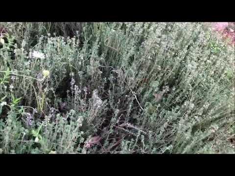 Galilee-Dreams Herb Garden