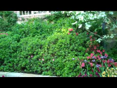 English Gardening in Dallas Texas with Andrea Rucker