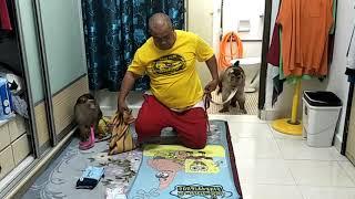 Monkey Jk Shaki wear Diapers