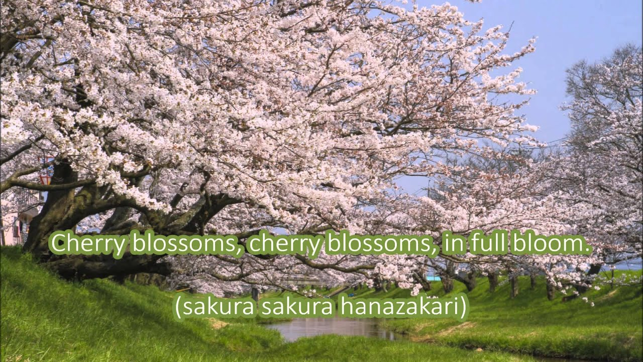 Japanese Folk Song #9: Cherry Blossoms (さくらさくら/Sakura Sakura)
