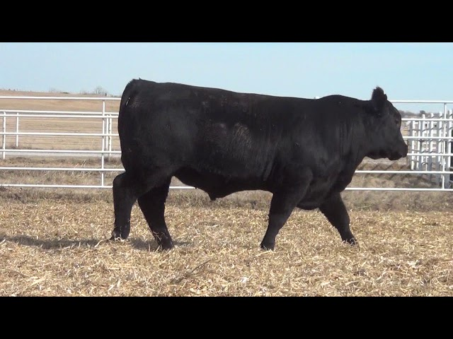 Express Ranches Lot 411