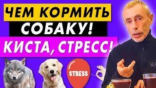 ЧЕМ КОРМИТЬ СОБАКУ! КИСТА, СТРЕСС! Виталий Островский. Вопросы в инстаграме, холка, питание собак.