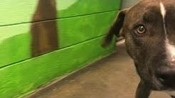Shelter dog stories: Meet Dalton