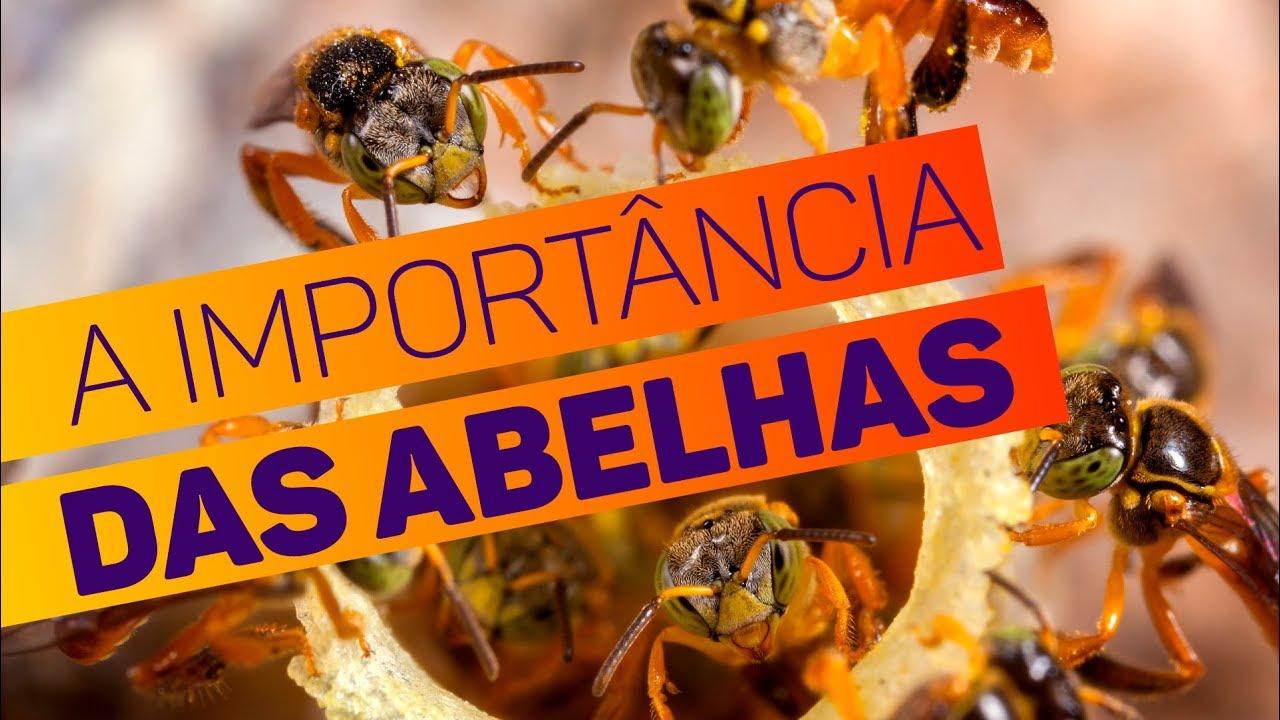 A extinção das abelhas poderia acabar com a vida na Terra