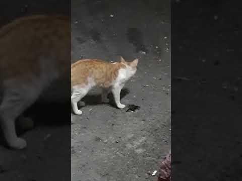 صوت قطه وصورة قطه Youtube