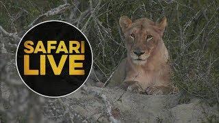 safariLIVE - Sunset Safari - July 15, 2018