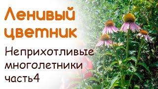 видео Выращиваем цветы гелениума в открытом грунте: посадка и уход