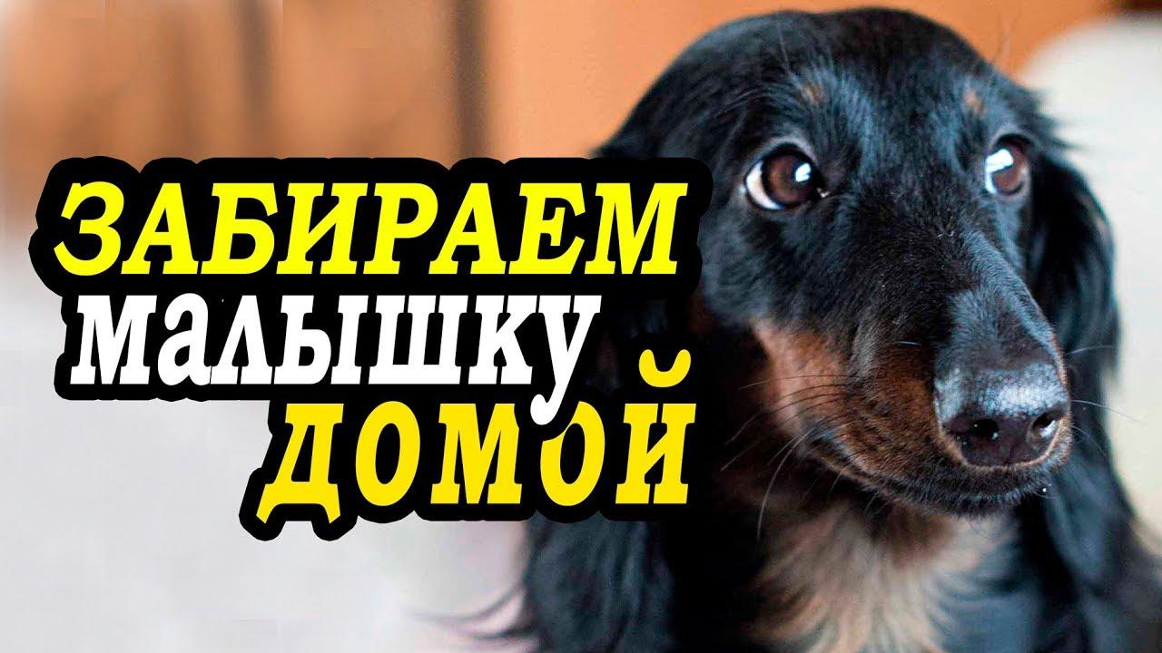 Щенок таксы видео!!! СМОТРЕТЬ ВИДЕО!!! - YouTube
