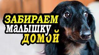 VLOG: Трогательная встреча с щенком/аэропорт/такса