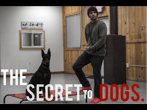 America's Canine Educator- The SECRET every dog owner NEEDS to know!