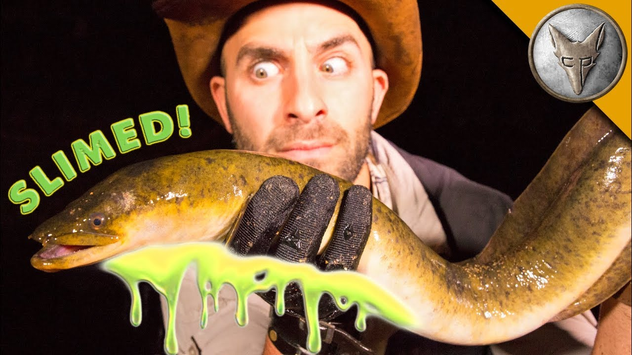 SLIMED by a GIANT EEL!