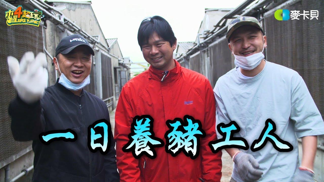 《一日系列第五十六集》這不是小胖特輯!! 邰智源跟KID帶你認識養豬生活~-一日養豬工人