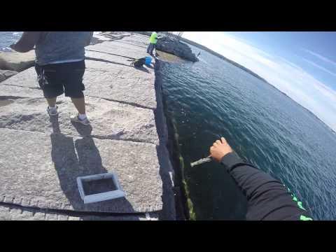 Glouceter Squid Fishing