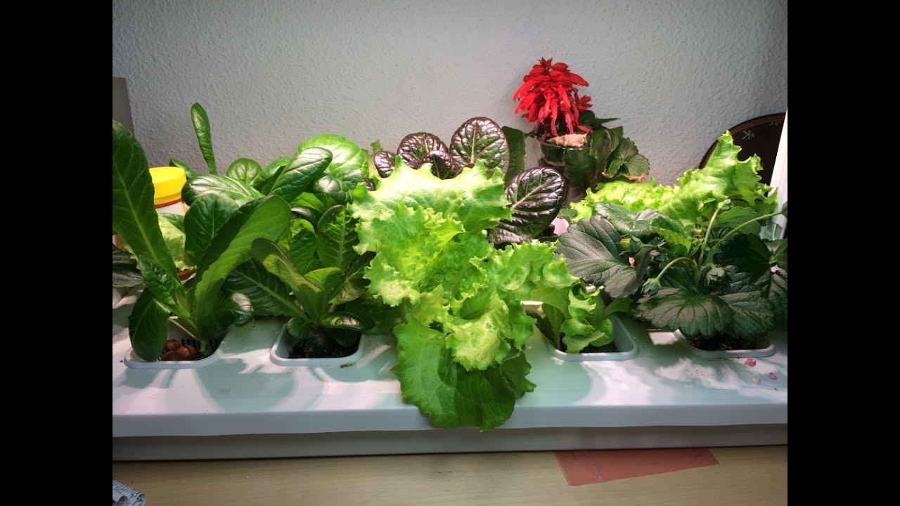 Cultivo Hidroponico Ikea Krydda Vaxer Youtube