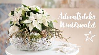 DIY: Adventsdeko Winterwald mit Weihnachtssternen