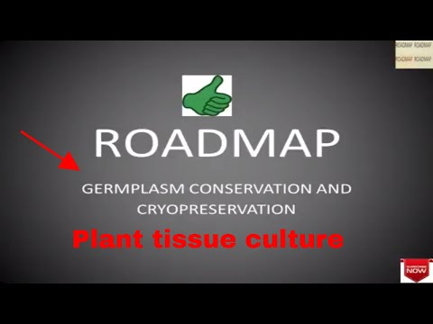 Germplasm conservation and cryopreservation