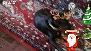 Моя собака кайфует!!!