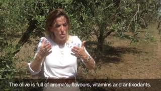 EVOO Academy - How to obtain excellent olive oil