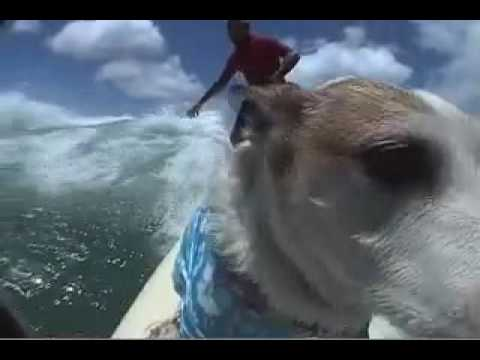 Dogs that Surf