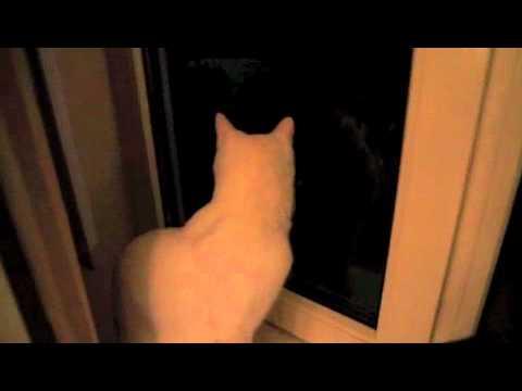 Kat heeft ruzie achter glas