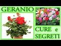 GERANI MERAVIGLIOSI  tutti i trucchi e segreti per curarli, farli fiorire E ripr