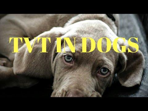 Transmissible Venereal Tumor in Dogs | Vet Visit