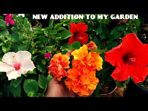 New Beautiful Flowers And Plants in My Garden