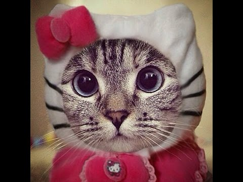 CUTEST CAT Halloween Costumes , My Pets Paws