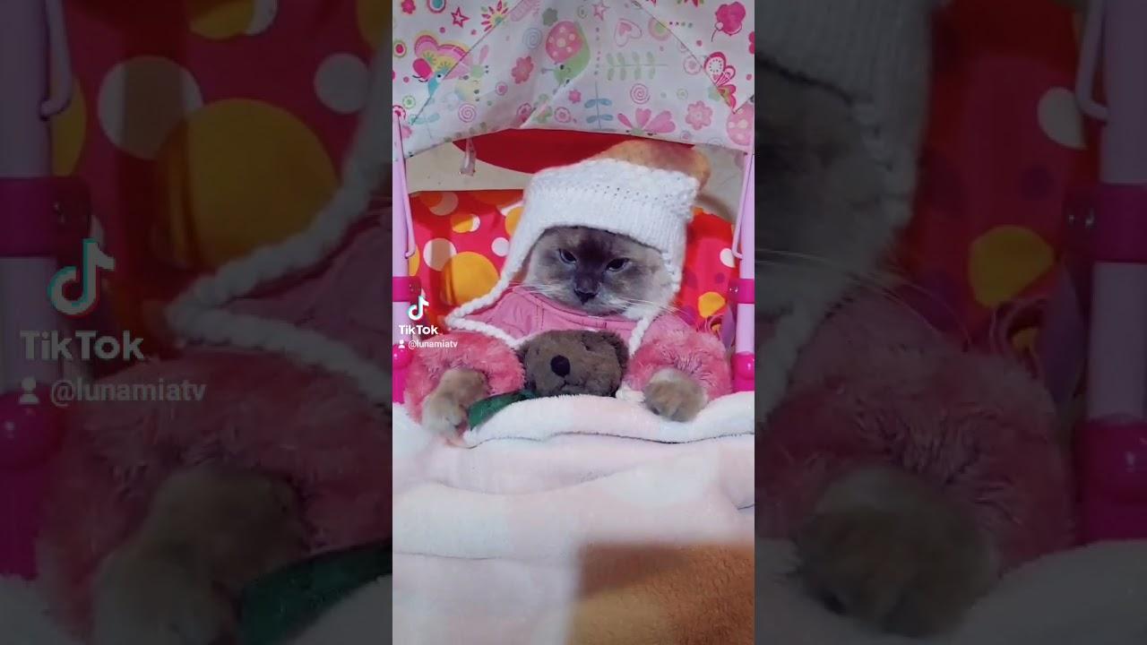 baby Kitty lista para dormir   #tiktok