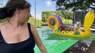 Dogs Swimming Day   Ep 5   Khopoli Series   Ss vlogs :)
