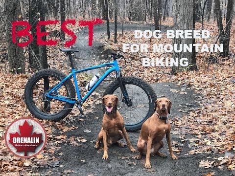 Best Dog Breed for Mountain Biking