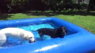 My dogs staying COOL in their DOG POOL!!! Thumbnail