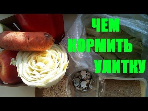 Чем кормить улиток Ахатин�� Кормление улиток������