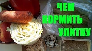 Чем кормить улиток Ахатин🐚 Кормление улиток🍅🍐🍎